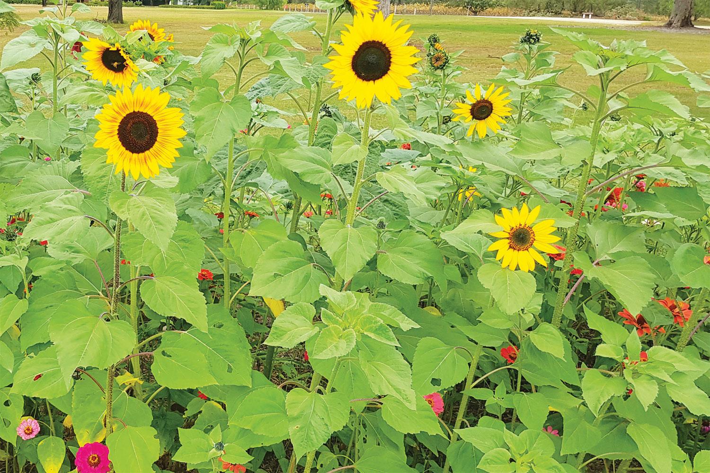 Your October garden calendar