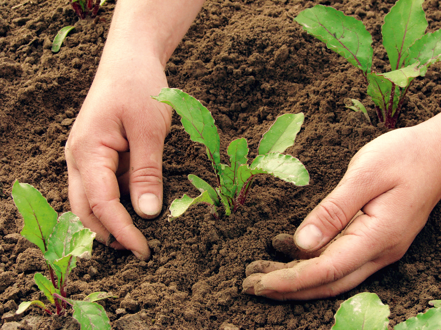 New plantings might need a little shading canstockphoto2064264