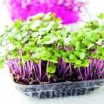 """Fast food"": Secrets of sprouting"