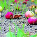 Autumn gardening: Your April garden calendar