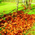 Autumn gardening: Your April garden calendar