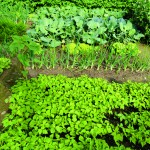 Changing the Bed: Crop rotation in your garden
