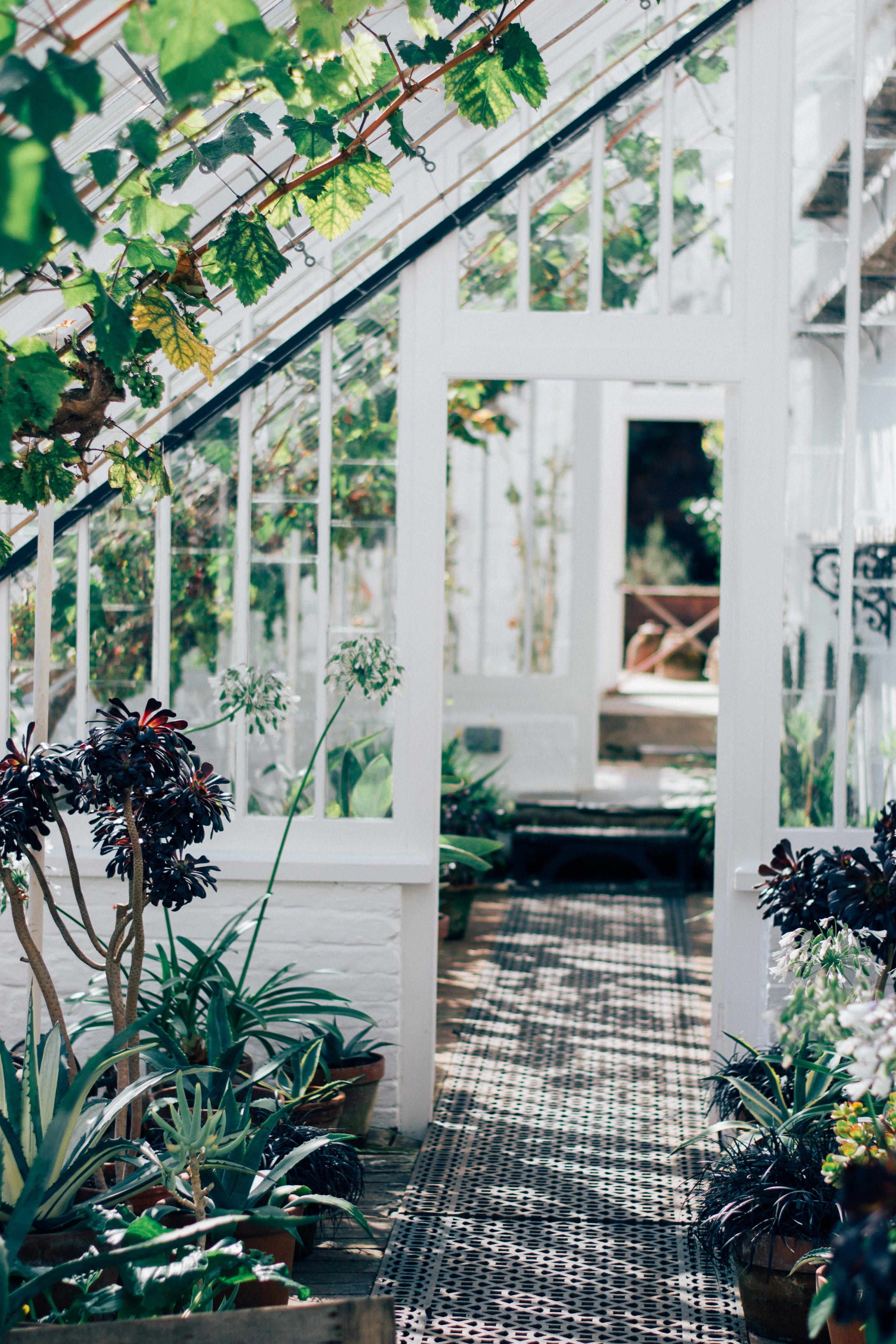 Backyard: Greenhouse