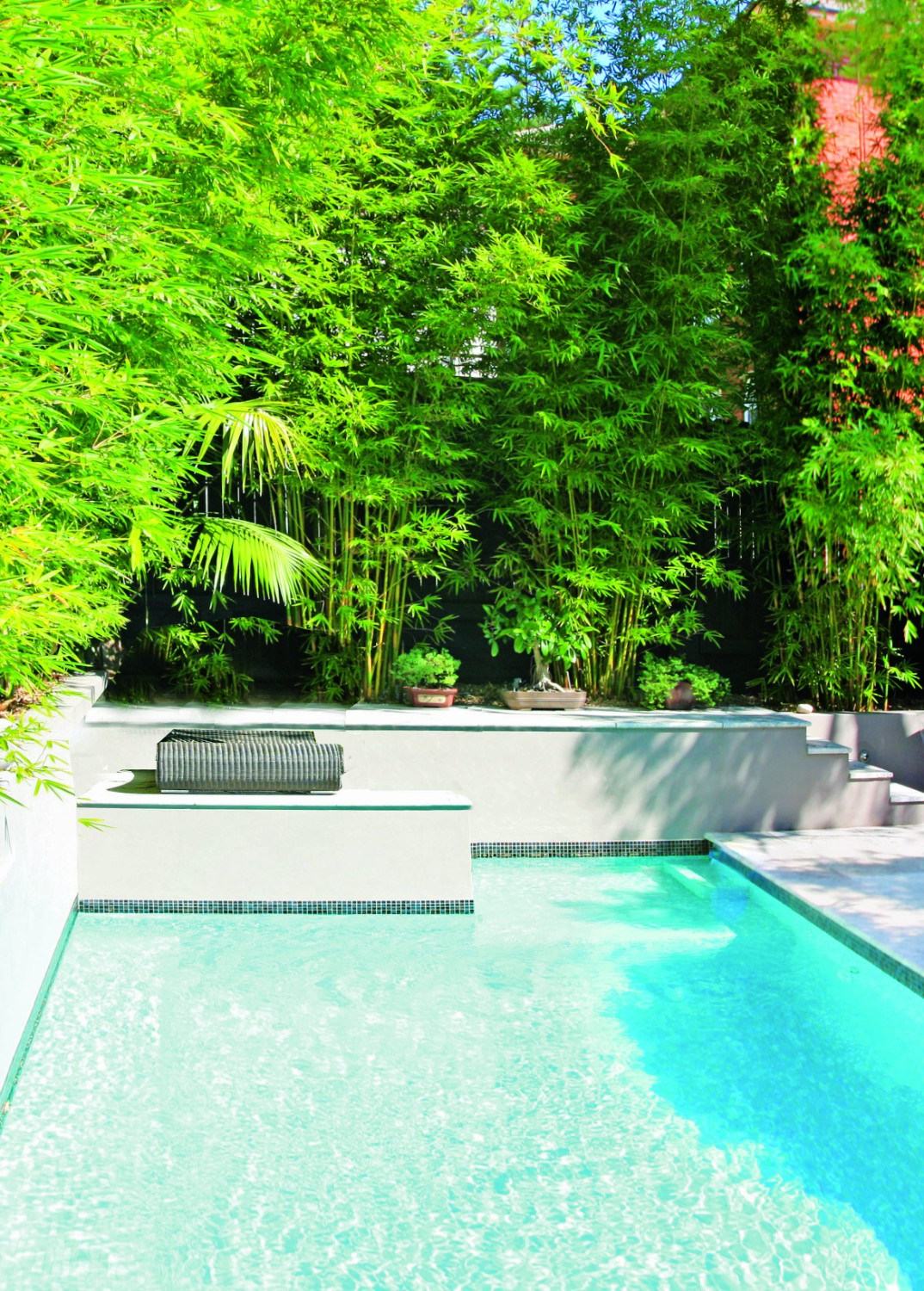 Screening plants: creating your outdoor sanctuary - pool screen hedges