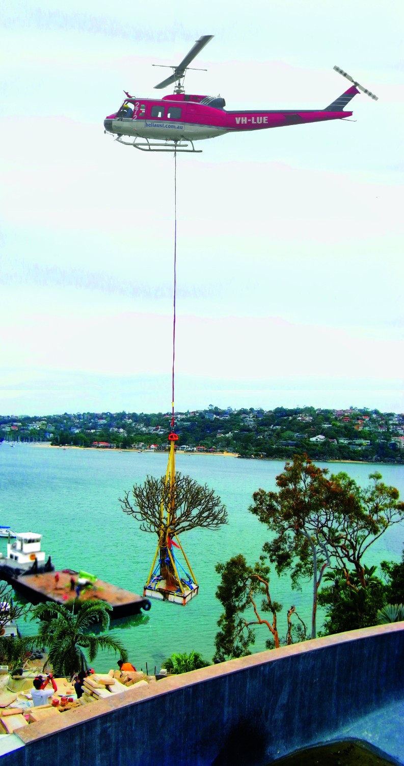 Screening plants: creating your outdoor sanctuary - helicopter lifting tree into place