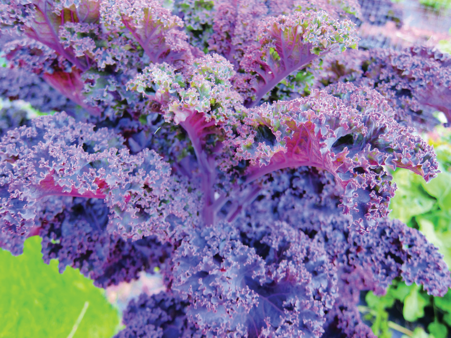 All Hail Kale: Good Organic Gardening