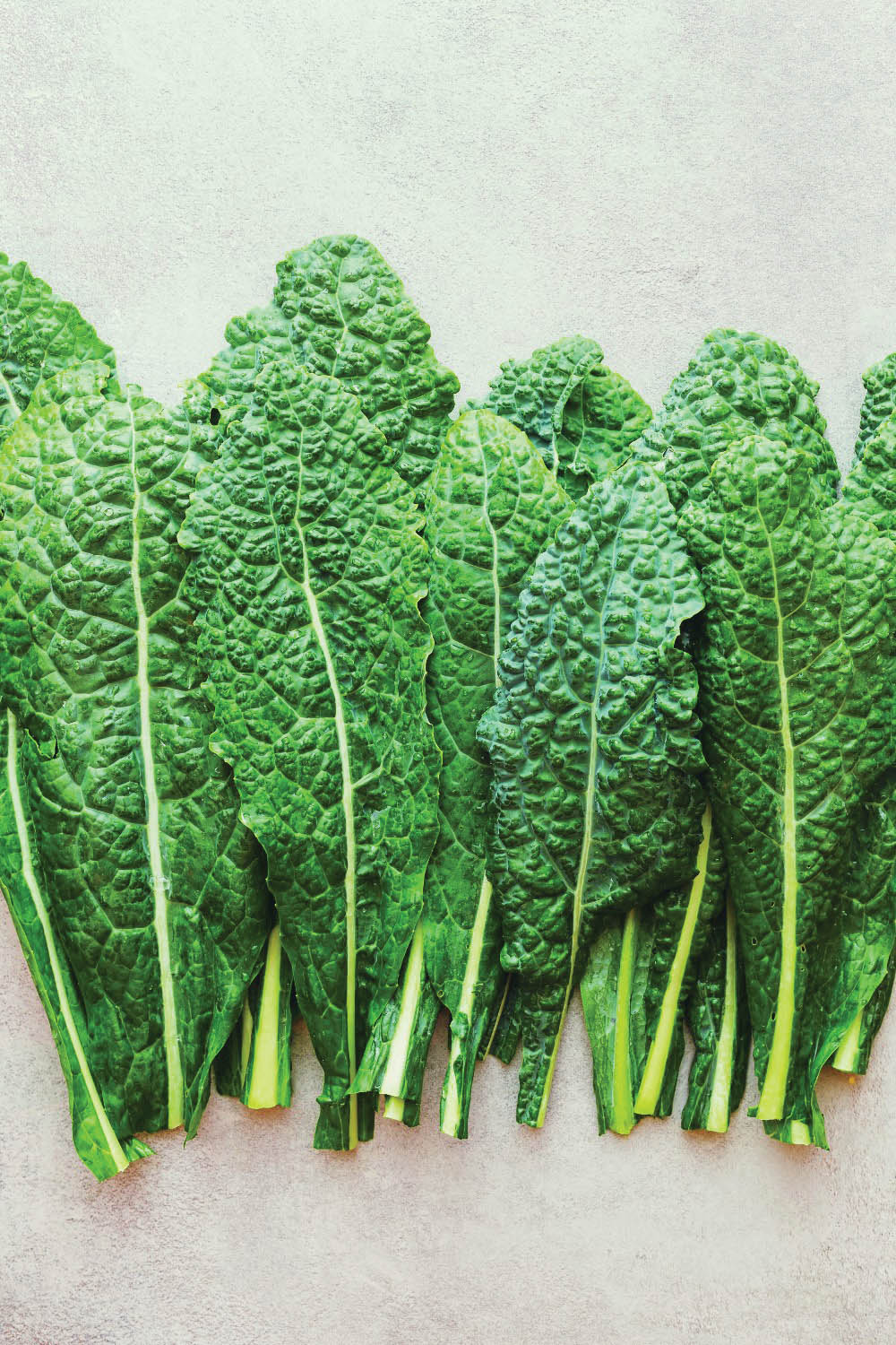 All Hail Kale: Good Organic Gardening - Cavolo Nero - a popular variety