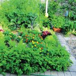 Small but mighty: an experimental garden
