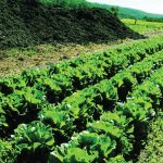 Back to nature: a commercial farm's change to sustainable