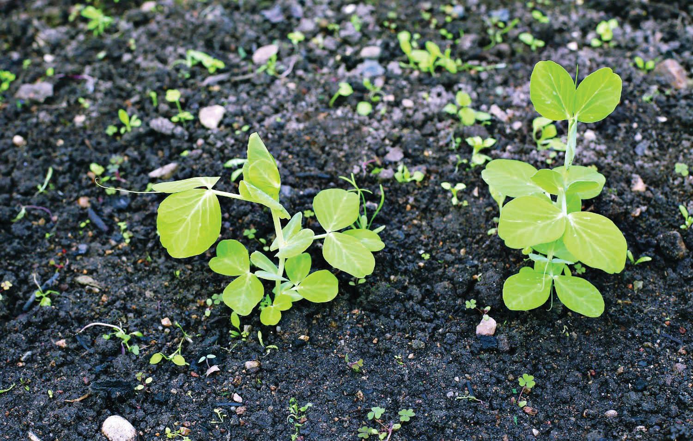 3 garden must-do's for June