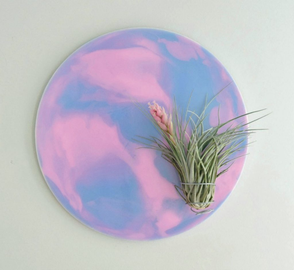Laundry air plant wall art