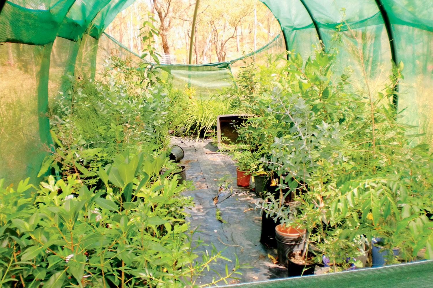 Regrowing the forest: One man's exploration of nature-centric gardening