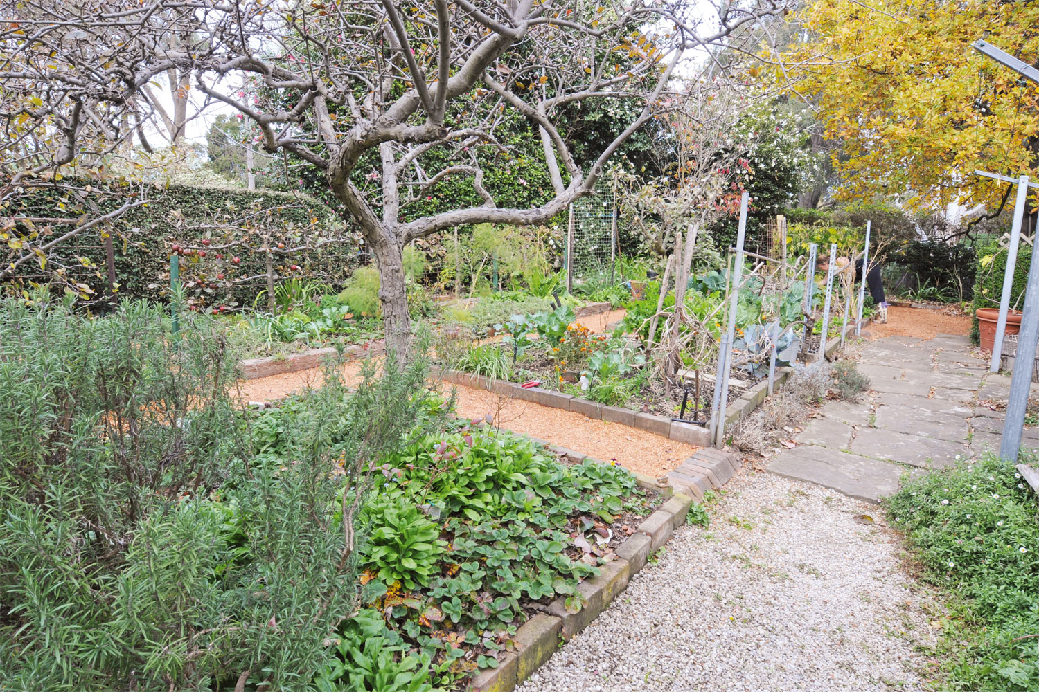 Garden glory: a sustainability-focused organic garden