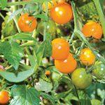 Your September Garden Calendar