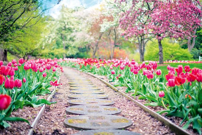 5 inspiring garden projects