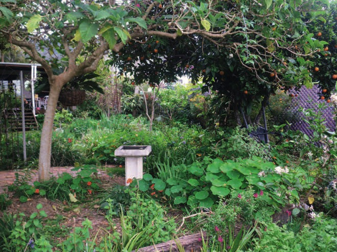 Under the mango tree: a vibrant mid-north coast garden
