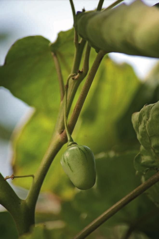 Under the mango tree: a vibrant mid-north coast garden