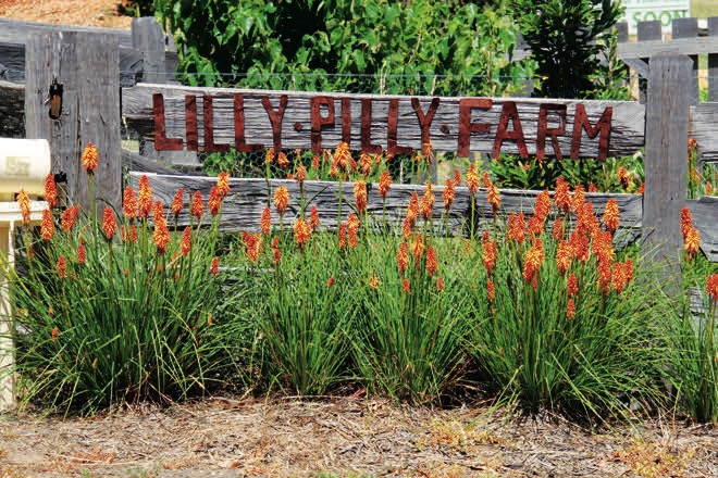LillyPilly Farm: Inside this productive organic garden