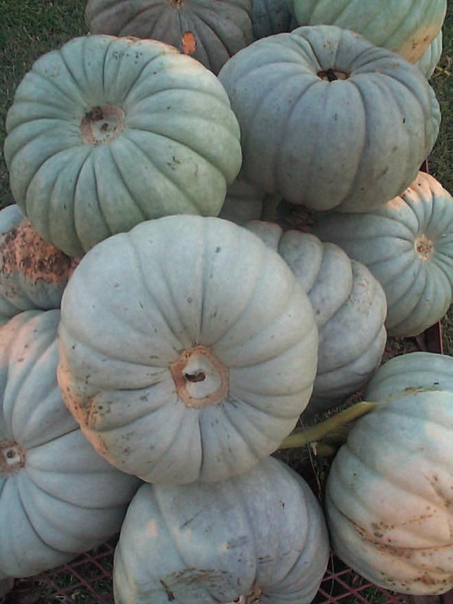 Organic hospitality: a boutique retreat garden