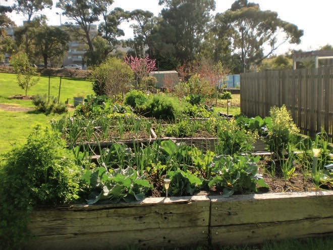 Vision and vegies: where urban agriculture meets education