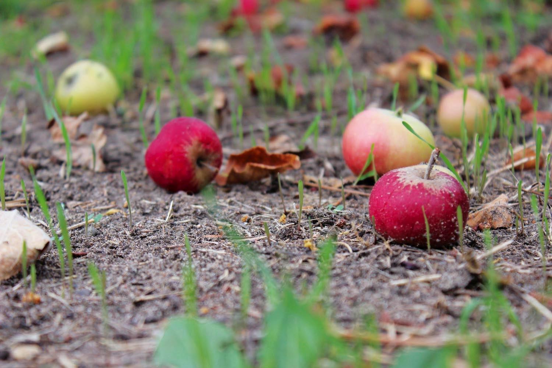 April Garden Calendar