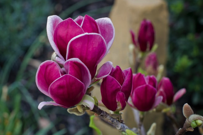 Winter-flowering plants: add colour to your garden