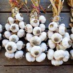 Boutique Garlic Farm
