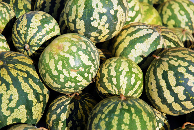 jam melons