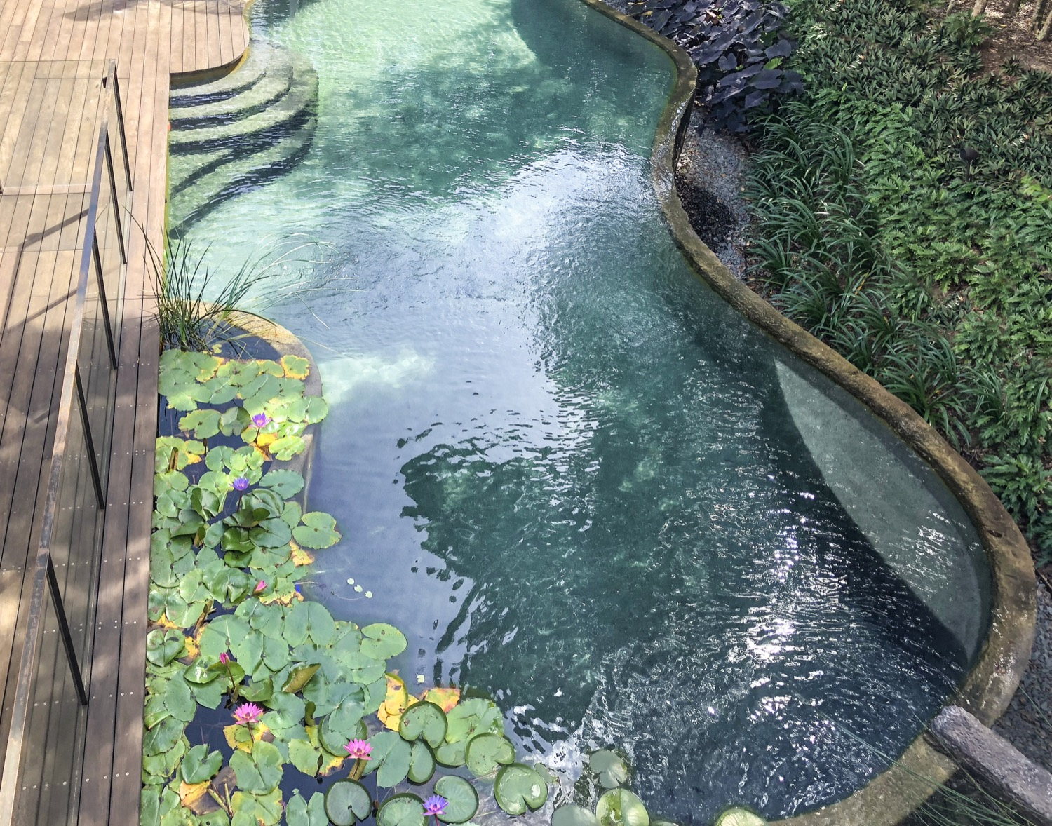 Natural Pools proving a new trend in sustainable design ...