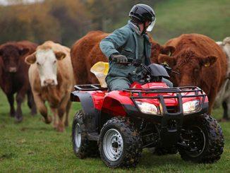 Honda Atv Cattle