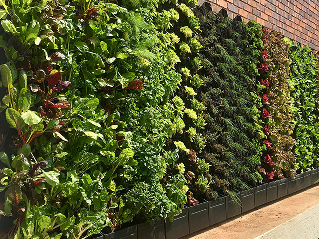 Amid Concerns Regarding Food Miles And Sprayed Crops, One Major Trend Is  Here To Stay: Food Producing Urban Gardens. To Service An Increasing Demand  For ...