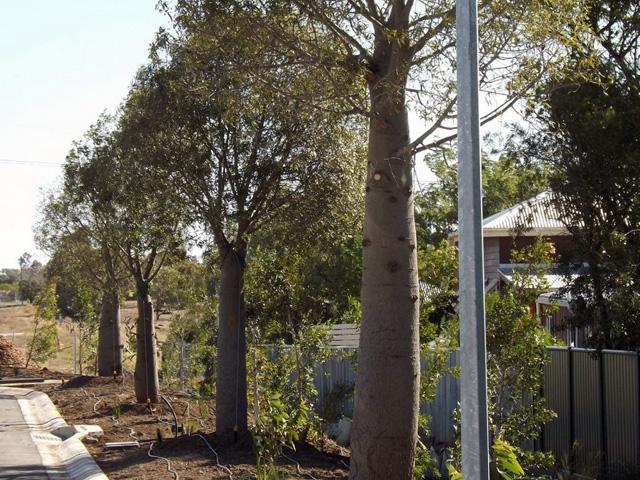environmental landscaping