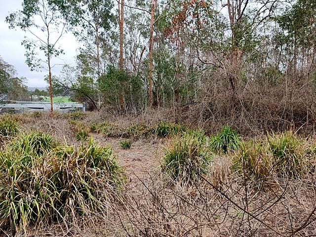 gatton correctional centre total environmental concepts