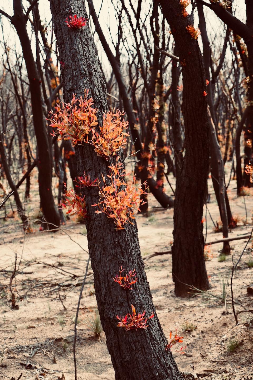 Aboriginal Fire Management
