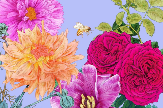 Beauty in botanicals: Get to know illustrator and author Adriana Picker