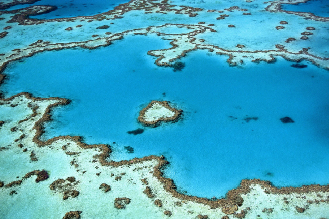 How climate change is affecting the Great Barrier Reef and what you can do to help