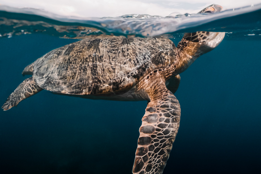 Climate change and our oceans: Creating a utopia for marine life