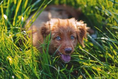 Adorable Animal Canine 173127
