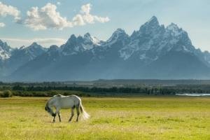 Wild horse Banff