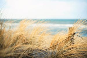 Grassy sand dunes