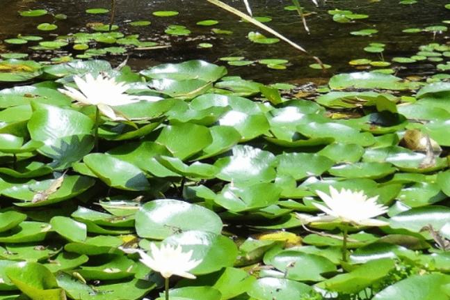 Shambala Gardens