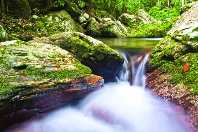 Rainforest spa, Daintree