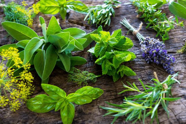 herbs that help you dream