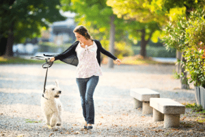 Pet dog walking with woman park