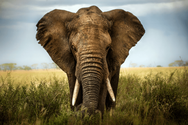 The Meaning Of Elephants In A Dream Wellbeing