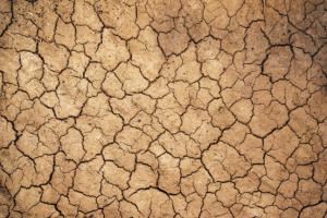 Mud cracks in dry earth