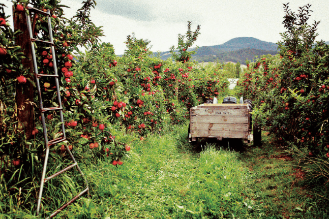 The Apple Shed – Smith Apple Orchard Tractor
