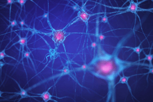 Brain cells and neurons
