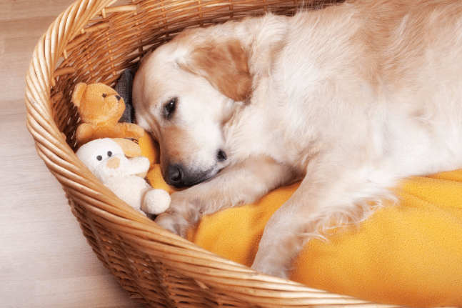 Dog sleepy hot pet cool summer