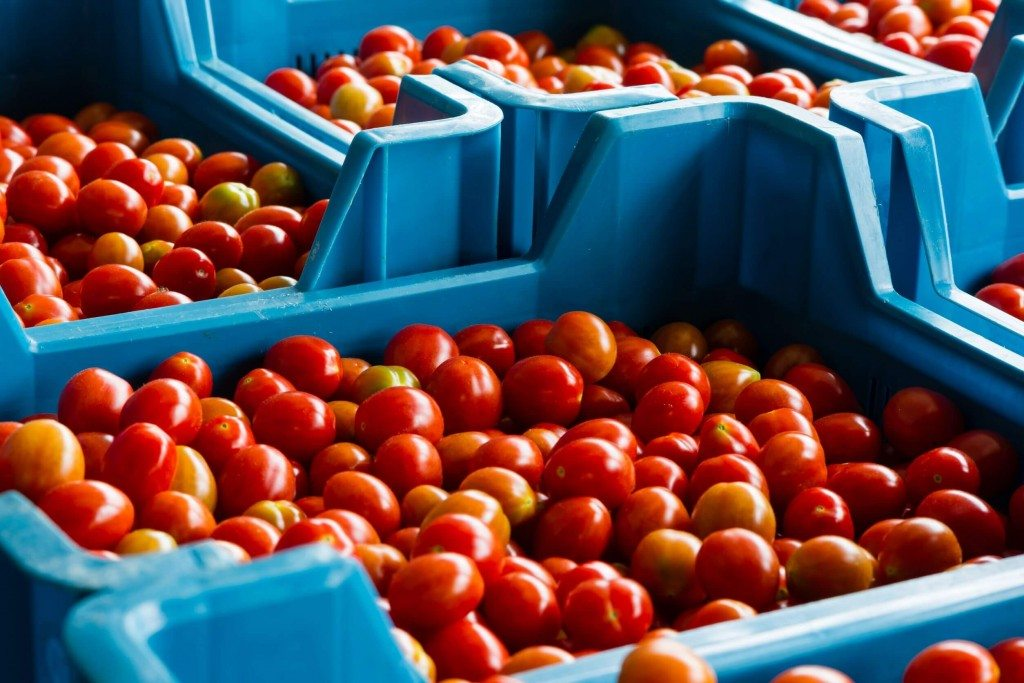 Tomatoes in crates ready for transport